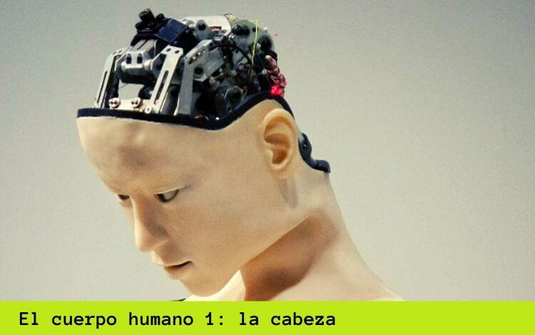 El cuerpo humano en alemán 1: la cabeza